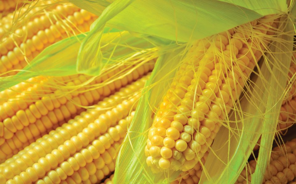 Agrilimpopo maize production