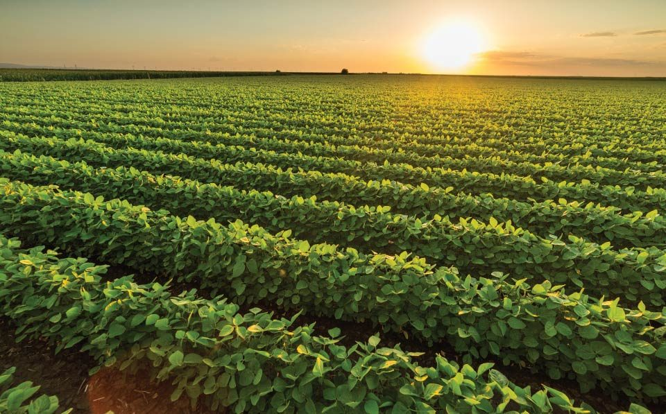 AgriLimpopo-grain-and-oilseed-production