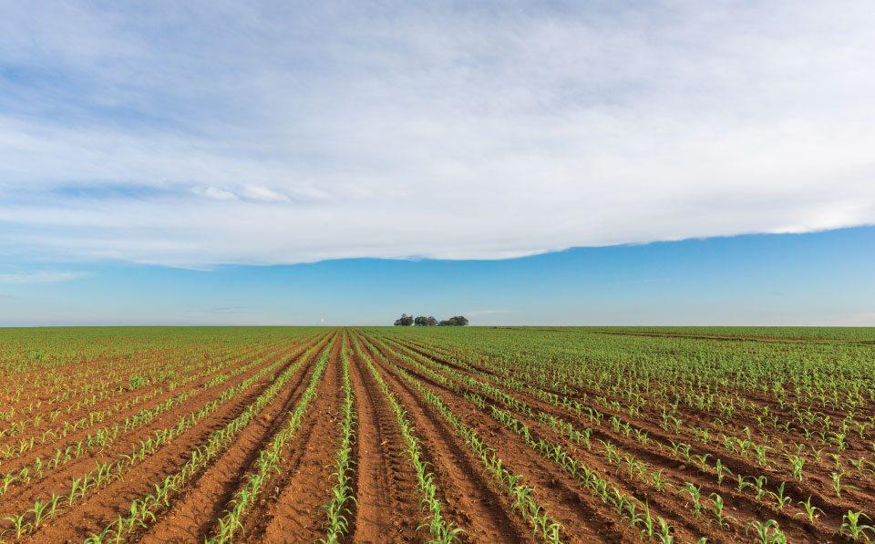 Agri-Limpopo-Maize-Planting